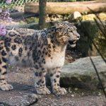 Photos du Parc Zoologique et botanique de Mulhouse