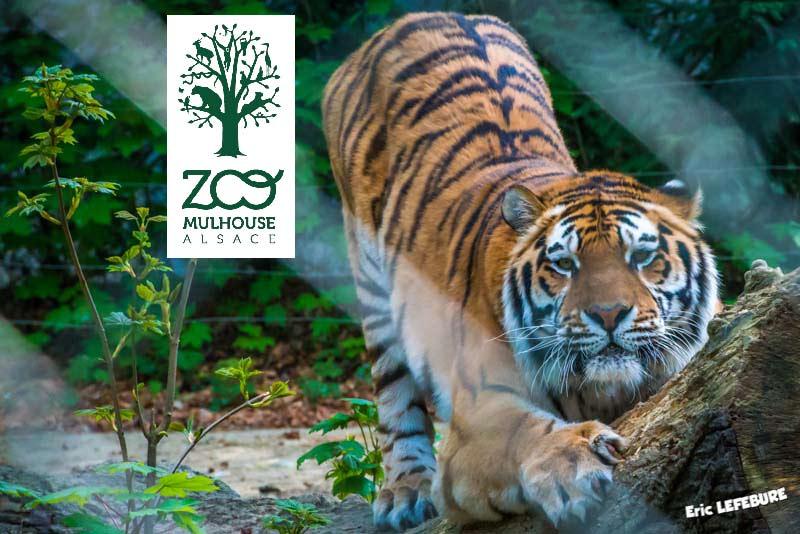 parc zoologique botanique les temps forts de l 39 ann e 2015. Black Bedroom Furniture Sets. Home Design Ideas