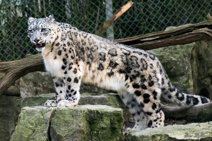 Photos Zoo de Mulhouse