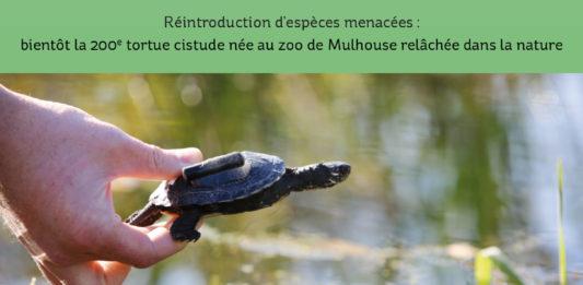 cistude née au zoo de Mulhouse